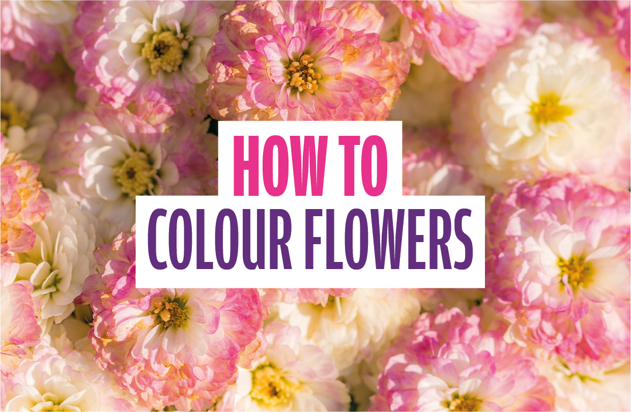 How to colour flowers